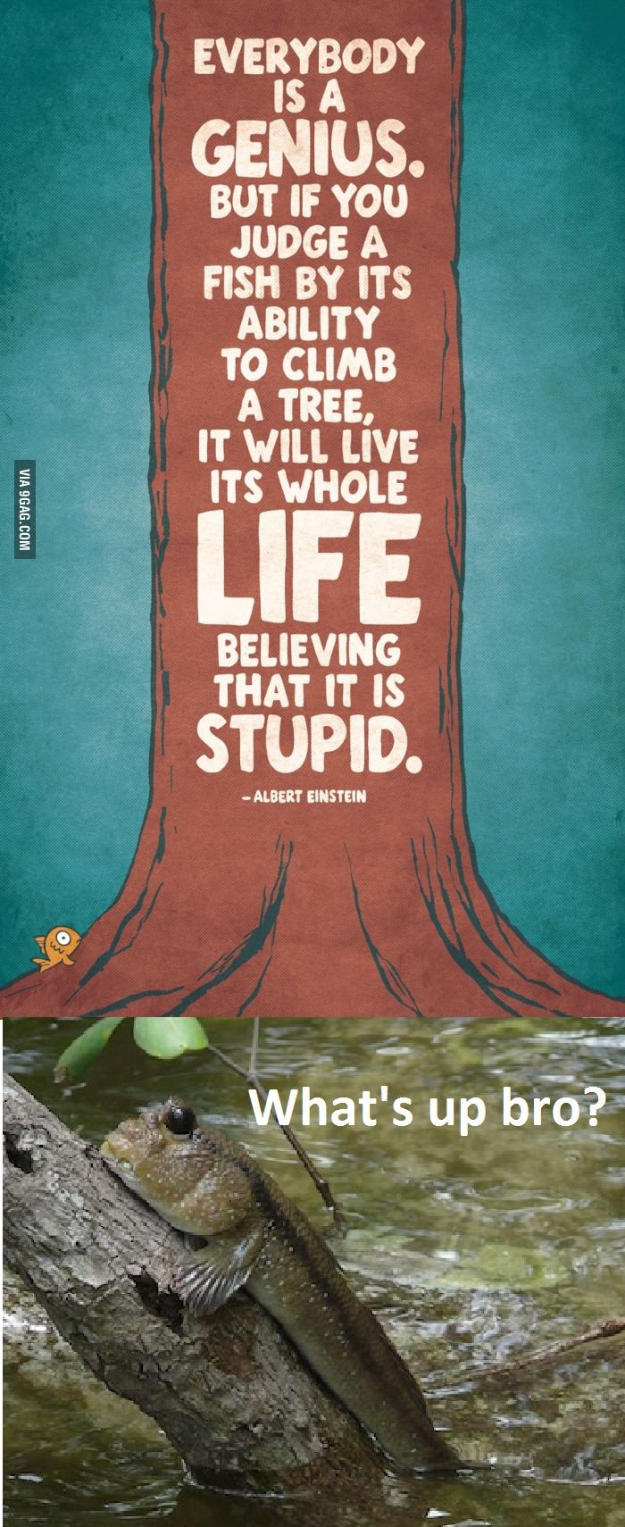 "everybody is genius. but if you judge a fish by its ability to climb a tree, it will live its whole life believing that ""it is stupid"". albert einstein"